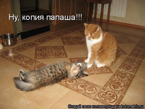 Котоматрица: Ну, копия папаша!!!