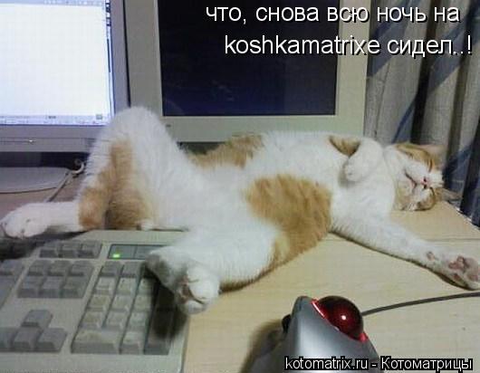 Котоматрица: что, снова всю ночь на koshkamatrixe сидел..!