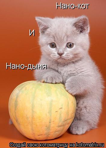 Нано коты