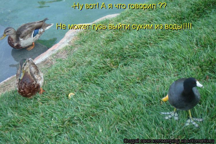 Котоматрица: -Ну вот! А я что говорил ?? Не может гусь выйти сухим из воды!!!!