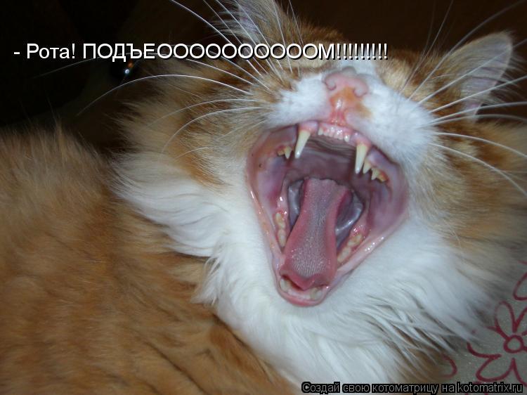 Котоматрица: - Рота! ПОДЪЕООООООООООМ!!!!!!!!!