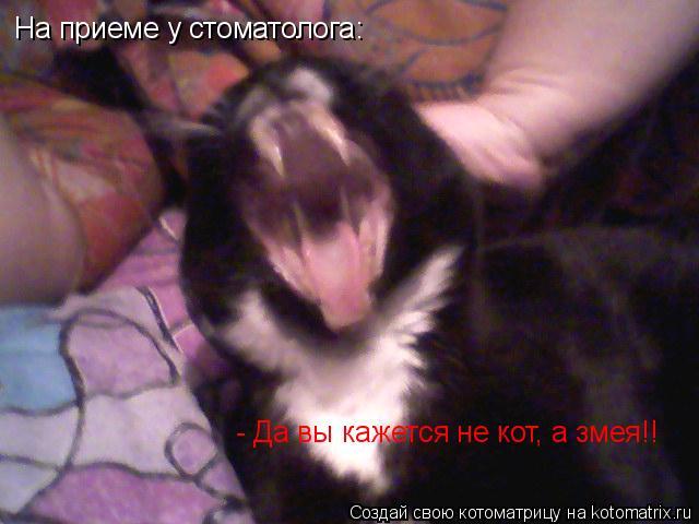 Котоматрица: На приеме у стоматолога:  - Да вы кажется не кот, а змея!!
