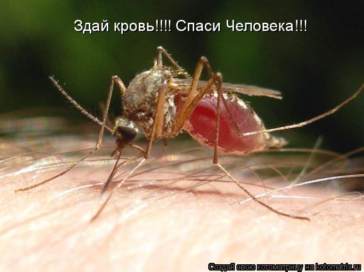 Котоматрица: Здай кровь!!!! Спаси Человека!!!