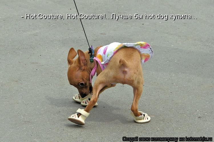 Котоматрица: - Hot Couture, Hot Couture!.. Лучше бы hot dog купила...