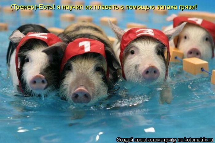 Котоматрица: (Тренер)-Есть! я научил их плавать с помощью запаха грязи!