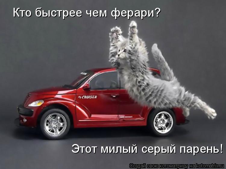 Котоматрица: Кто быстрее чем ферари? Этот милый серый парень!