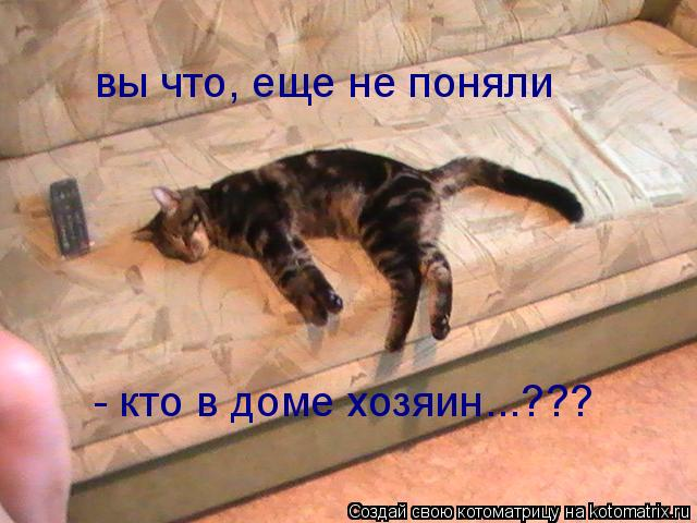 Котоматрица: вы что, еще не поняли - кто в доме хозяин...???