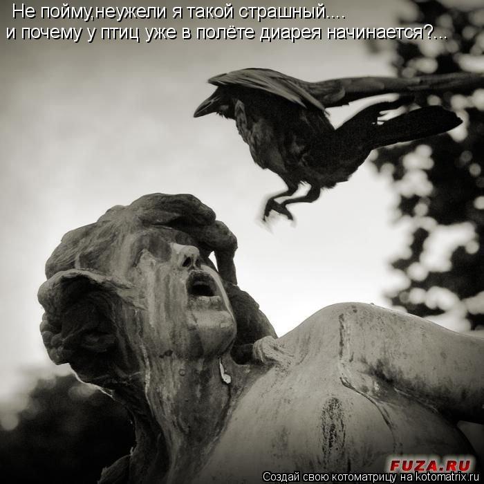 Котоматрица: Не пойму,неужели я такой страшный.... и почему у птиц уже в полёте диарея начинается?...