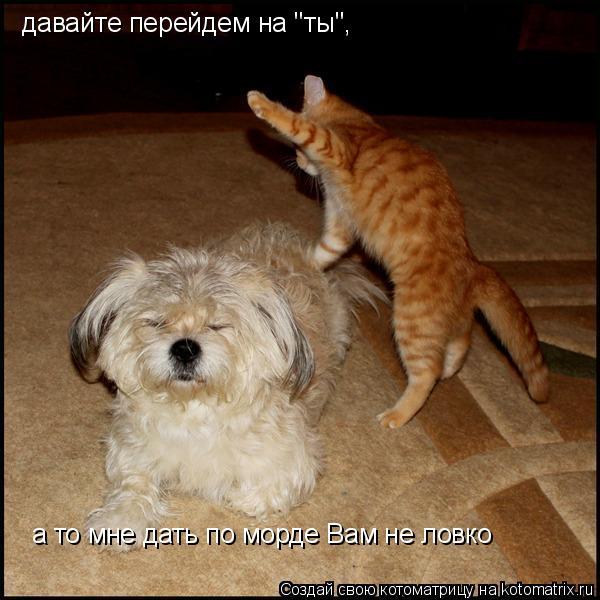 """Котоматрица: а то мне дать по морде Вам не ловко давайте перейдем на """"ты"""","""