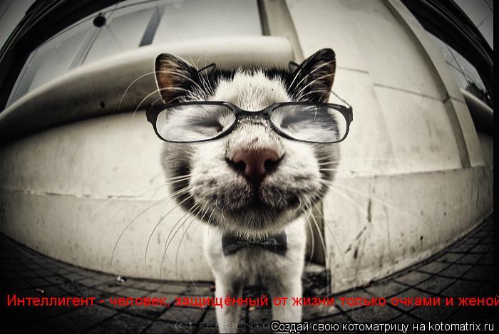 Котоматрица: Интеллигент - человек, защищённый от жизни только очками и женой.