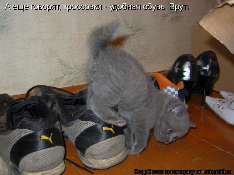 Котоматрица: А еще говорят, кроссовки - удобная обувь. Врут!