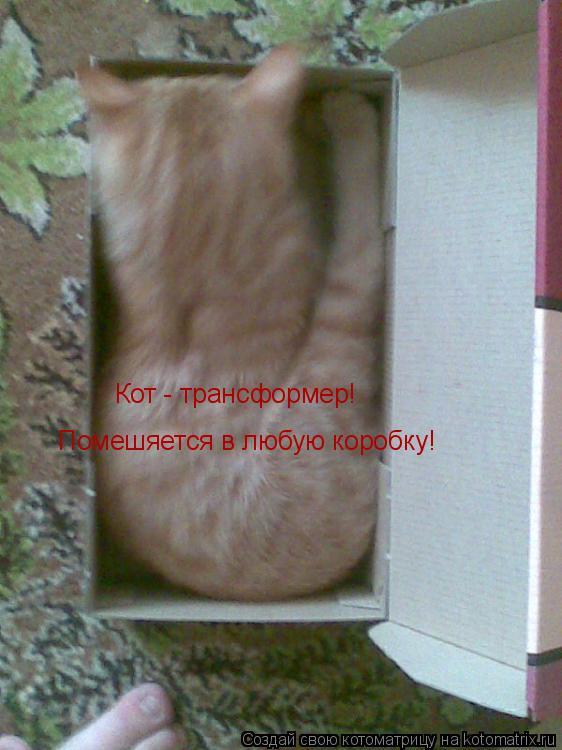Котоматрица: Кот - трансформер!  Помешяется в любую коробку!