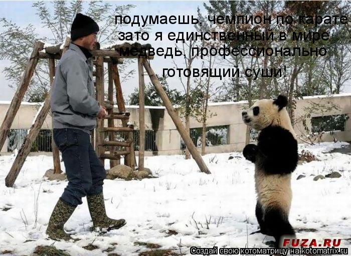 Котоматрица: подумаешь, чемпион по карате зато я единственный в мире медведь, профессионально готовящий суши!