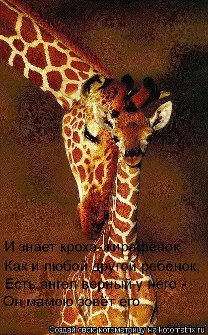 Котоматрица: И знает кроха-жирафёнок, Как и любой другой ребёнок, Есть ангел верный у него -  Он мамою зовёт его..