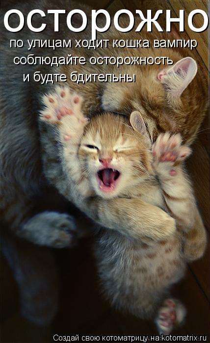 Котоматрица: осторожно по улицам ходит кошка вампир соблюдайте осторожность и будте бдительны