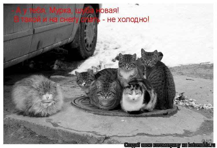 Котоматрица: - А у тебя, Мурка, шуба новая! В такой и на снегу спать - не холодно!