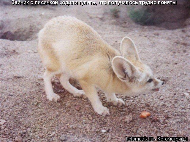 Котоматрица: Зайчик с лисичкой ходили гулять, что получилось трудно понять!