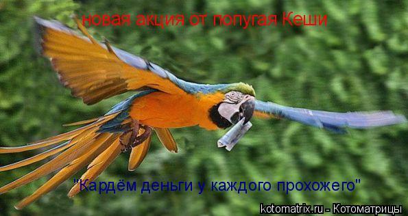 """Котоматрица: новая акция от попугая Кеши """"Кардём деньги у каждого прохожего"""""""