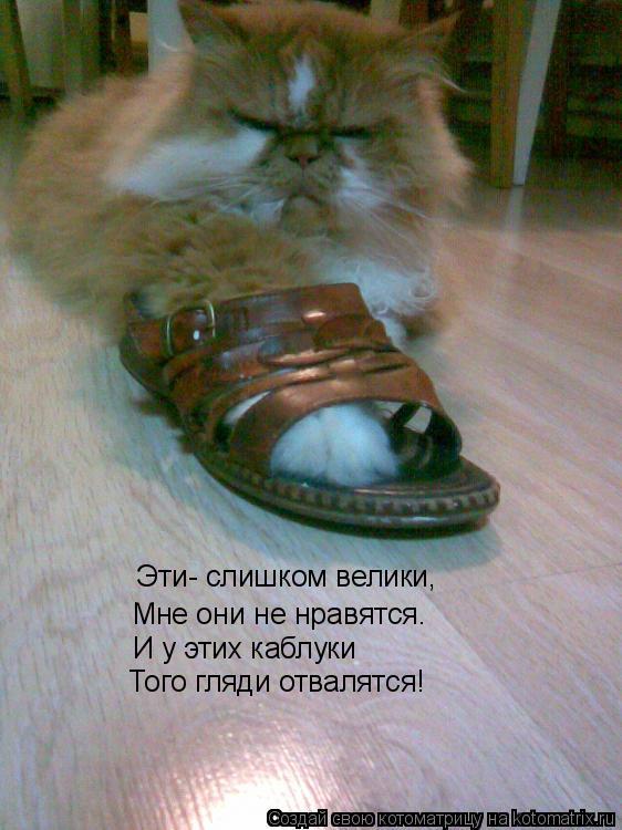 Котоматрица: Эти- слишком велики, Мне они не нравятся. И у этих каблуки Того гляди отвалятся!