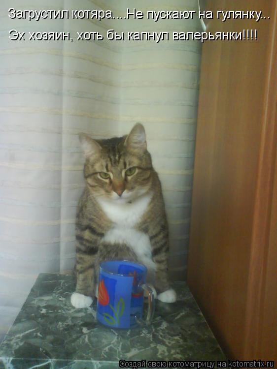 Котоматрица: Загрустил котяра.... Эх хозяин, хоть бы капнул валерьянки!!!! Не пускают на гулянку...