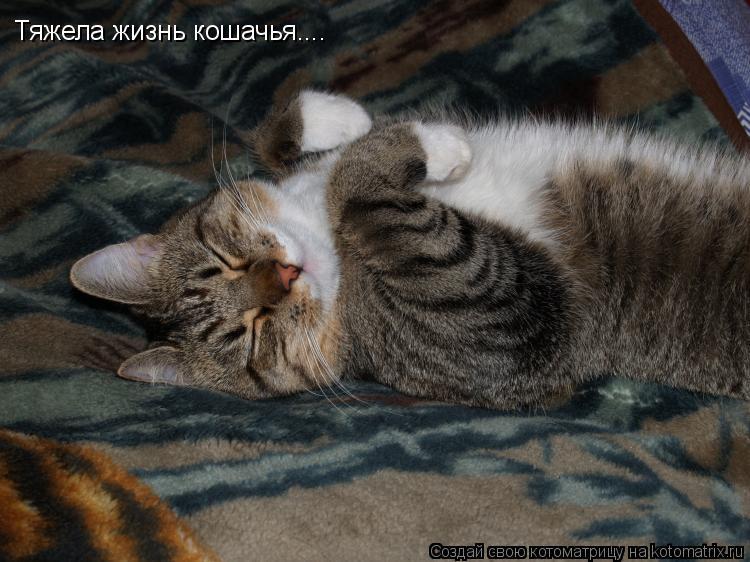 Котоматрица: Тяжела жизнь кошачья....