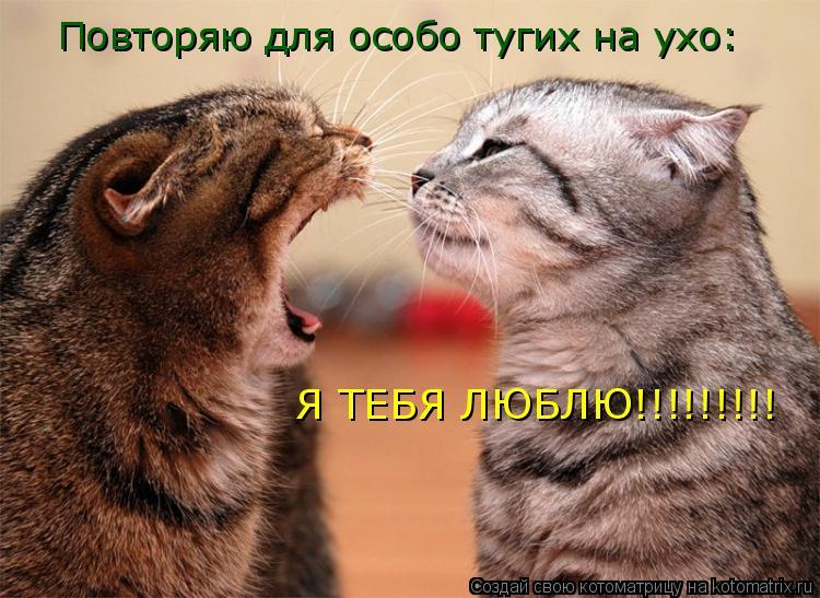Котоматрица: Повторяю для особо тугих на ухо: Я ТЕБЯ ЛЮБЛЮ!!!!!!!!!