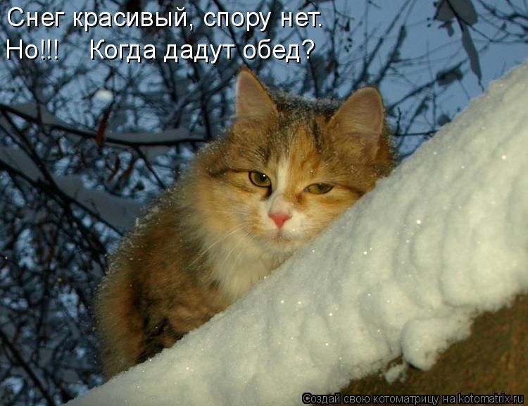 Котоматрица: Снег красивый, спору нет.  Но!!!    Когда дадут обед?