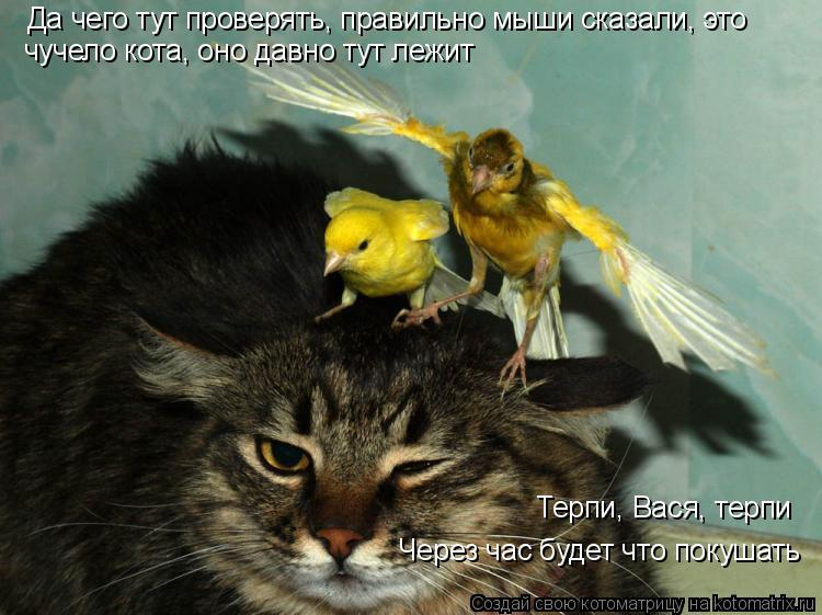 Котоматрица: Да чего тут проверять, правильно мыши сказали, это чучело кота, оно давно тут лежит Терпи, Вася, терпи Через час будет что покушать