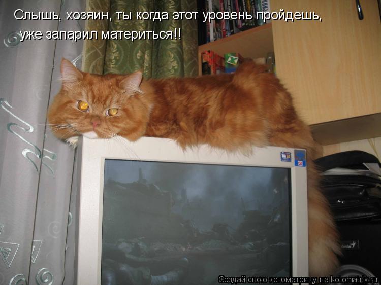 Котоматрица: Слышь, хозяин, ты когда этот уровень пройдешь, уже запарил материться!!