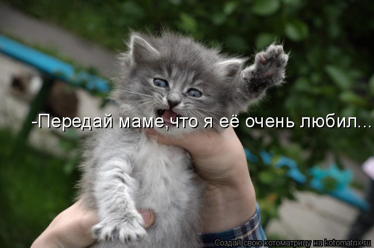 Котоматрица: -Передай маме,что я её очень любил...