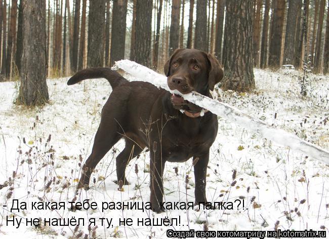 Котоматрица: - Да какая тебе разница, какая палка?!. Ну не нашёл я ту, не нашёл!..