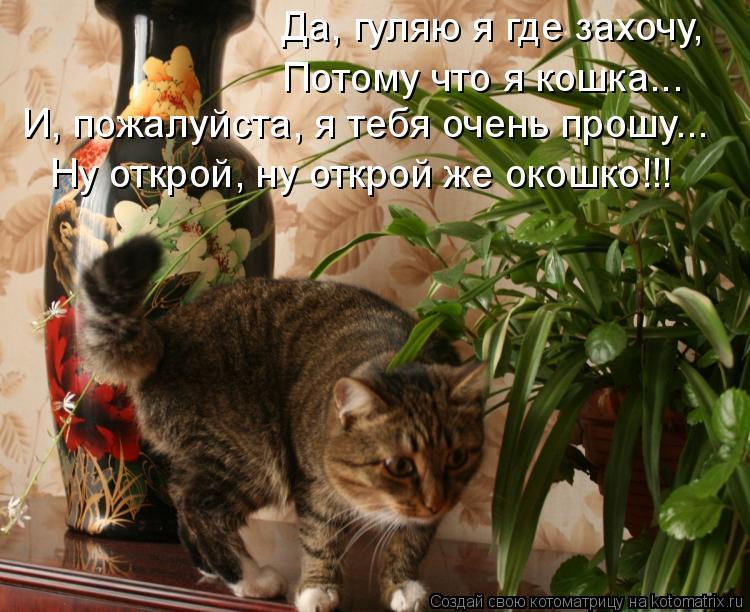Котоматрица: Да, гуляю я где захочу, Потому что я кошка... И, пожалуйста, я тебя очень прошу... Ну открой, ну открой же окошко!!!