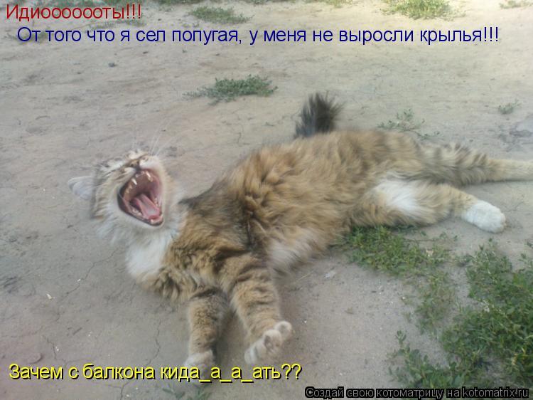 Котоматрица: Идиоoooооты!!!   От того что я сел попугая, у меня не выросли крылья!!! Зачем с балкона кида_а_а_ать??