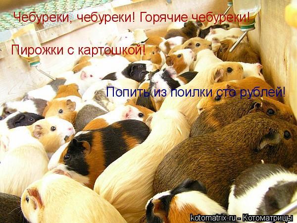 Котоматрица: Чебуреки, чебуреки! Горячие чебуреки! Пирожки с картошкой! Попить из поилки сто рублей!