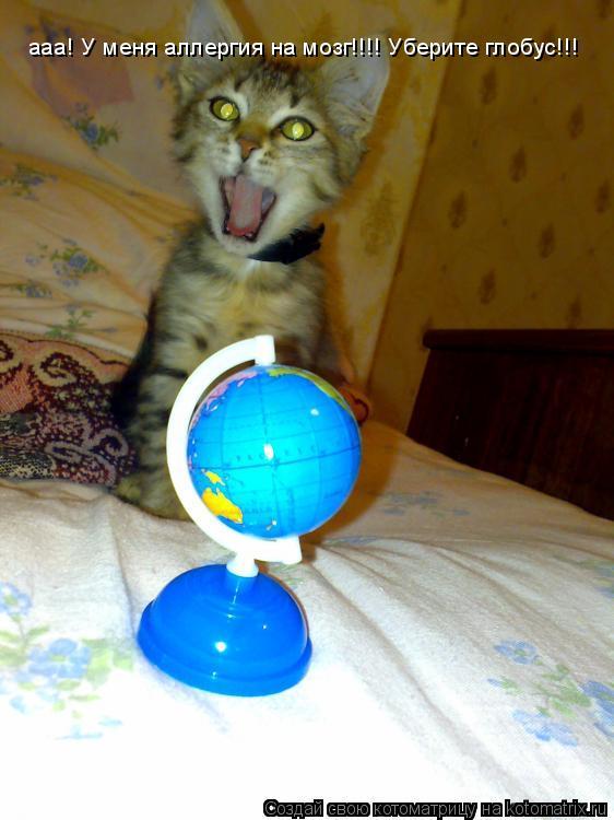 Котоматрица: ааа! У меня аллергия на мозг!!!! Уберите глобус!!!