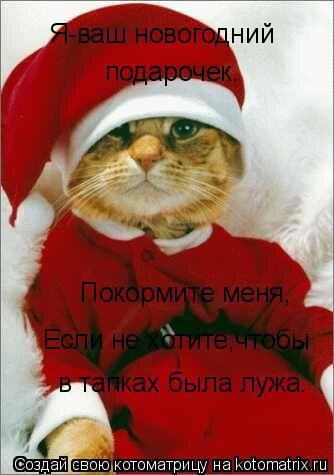 Котоматрица: Я-ваш новогодний  подарочек. Покормите меня, Если не хотите,чтобы в тапках была лужа.