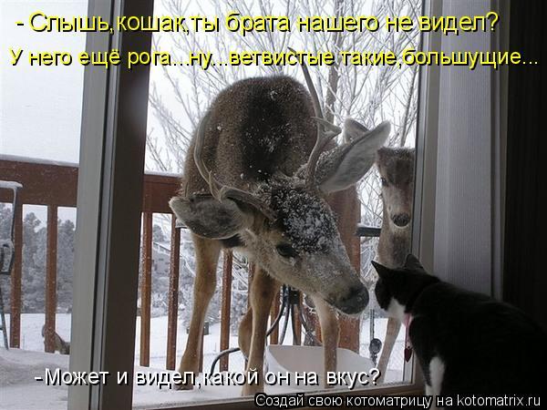 Котоматрица: Слышь,кошак,ты брата нашего не видел? У него ещё рога...ну...ветвистые такие,большущие... Может и видел,какой он на вкус? - -