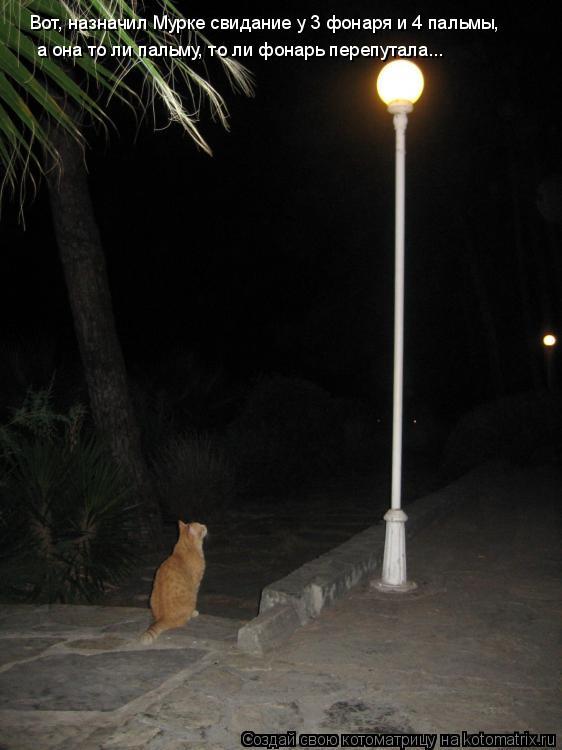 Котоматрица: Вот, назначил Мурке свидание у 3 фонаря и 4 пальмы, а она то ли пальму, то ли фонарь перепутала...