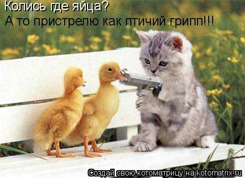 Котоматрица: Колись где яйца? А то пристрелю как птичий грипп!!!