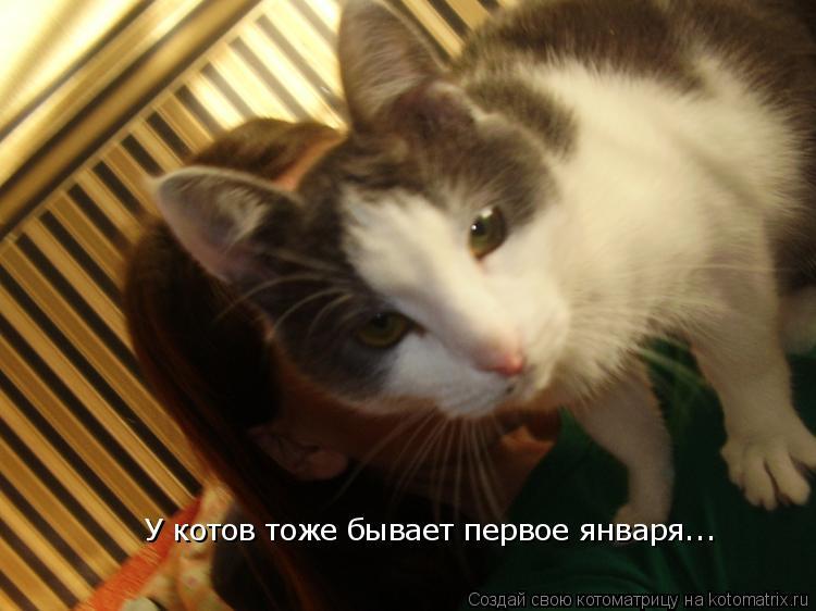 Котоматрица: У котов тоже бывает первое января...