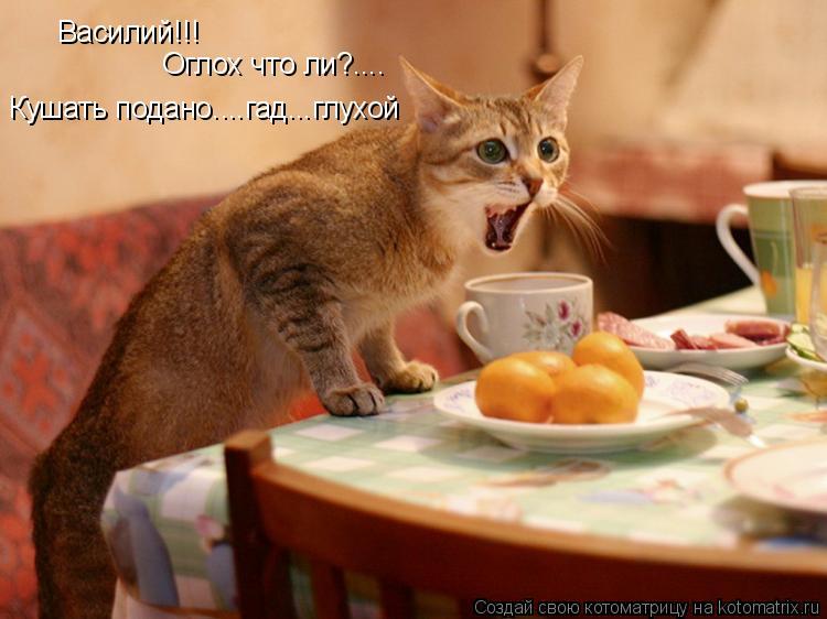 Котоматрица: Василий!!! Оглох что ли?.... Кушать подано....гад...глухой