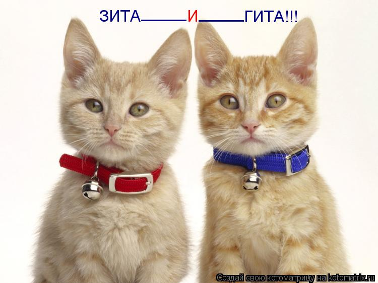 Котоматрица: ЗИТА _____ И _____ ГИТА!!!