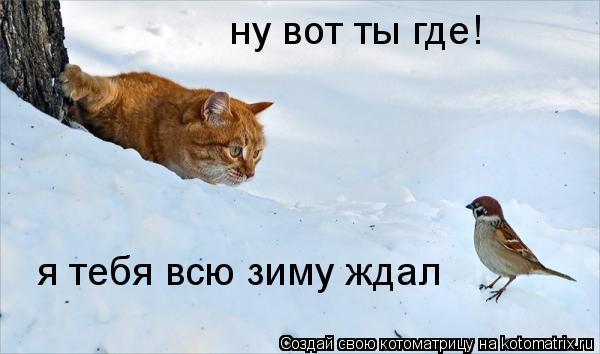 Котоматрица: ну вот ты где! я тебя всю зиму ждал