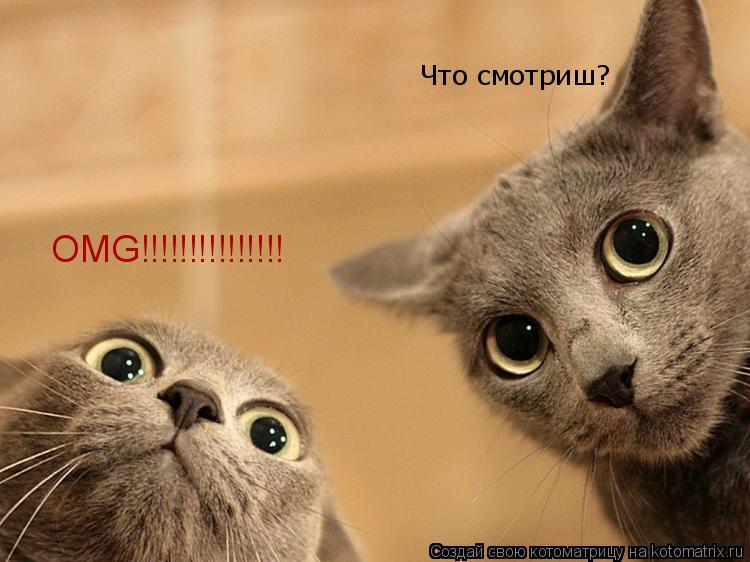Котоматрица: Что смотриш? OMG!!!!!!!!!!!!!!!