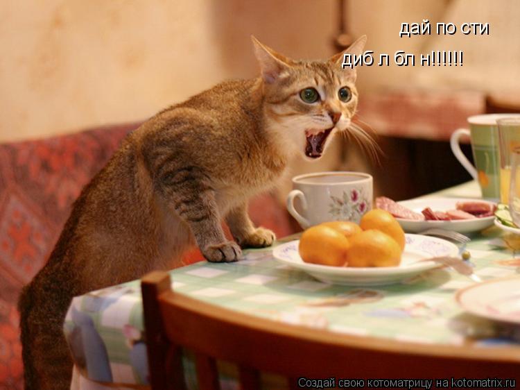 Котоматрица: дай поїсти  дибіл блін!!!!!!