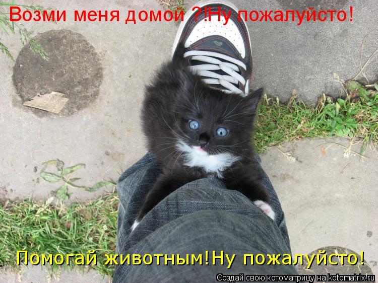 Котоматрица: Возми меня домой ?!Ну пожалуйсто! Помогай животным!Ну пожалуйсто!