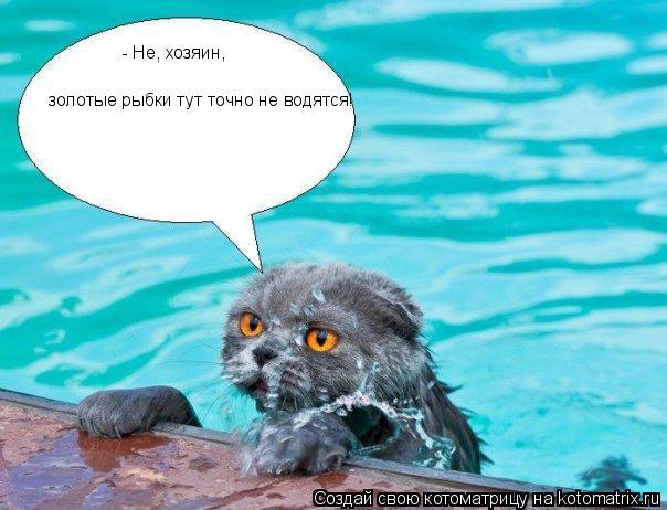 Котоматрица: - Не, хозяин,  золотые рыбки тут точно не водятся!