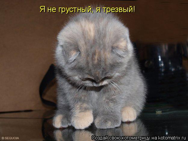 Котоматрица: Я не грустный, я трезвый!
