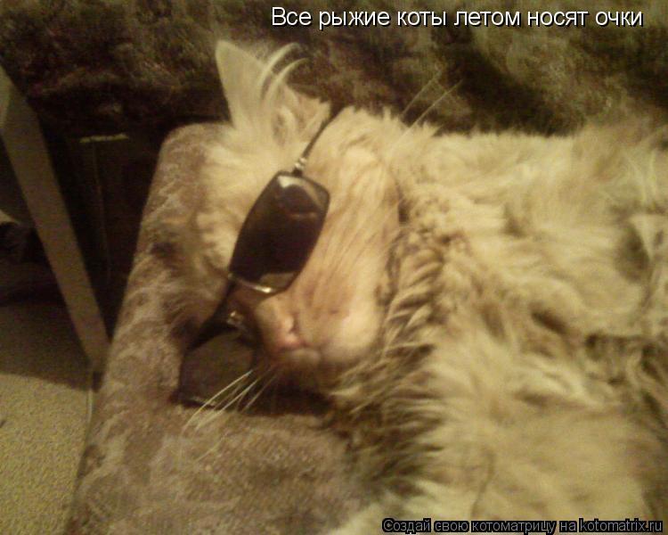 Котоматрица: Все рыжие коты летом носят очки