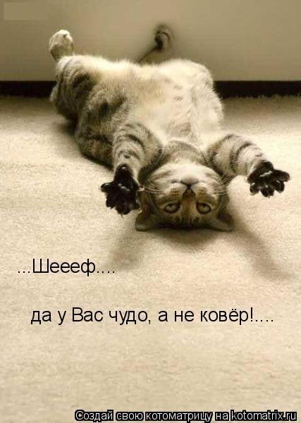 Котоматрица: ...Шеееф.... да у Вас чудо, а не ковёр!....